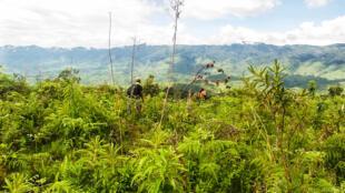 Située au nord-ouest du lac Tanganyika, la Réserve Naturelle d'Itombwe (RNI) a été créée en octobre 2006 par un arrêté ministériel.