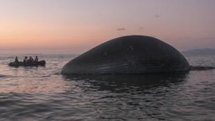 Le cadavre de la baleine a été repéré près de la côte de Kupang, sur l'île du Timor