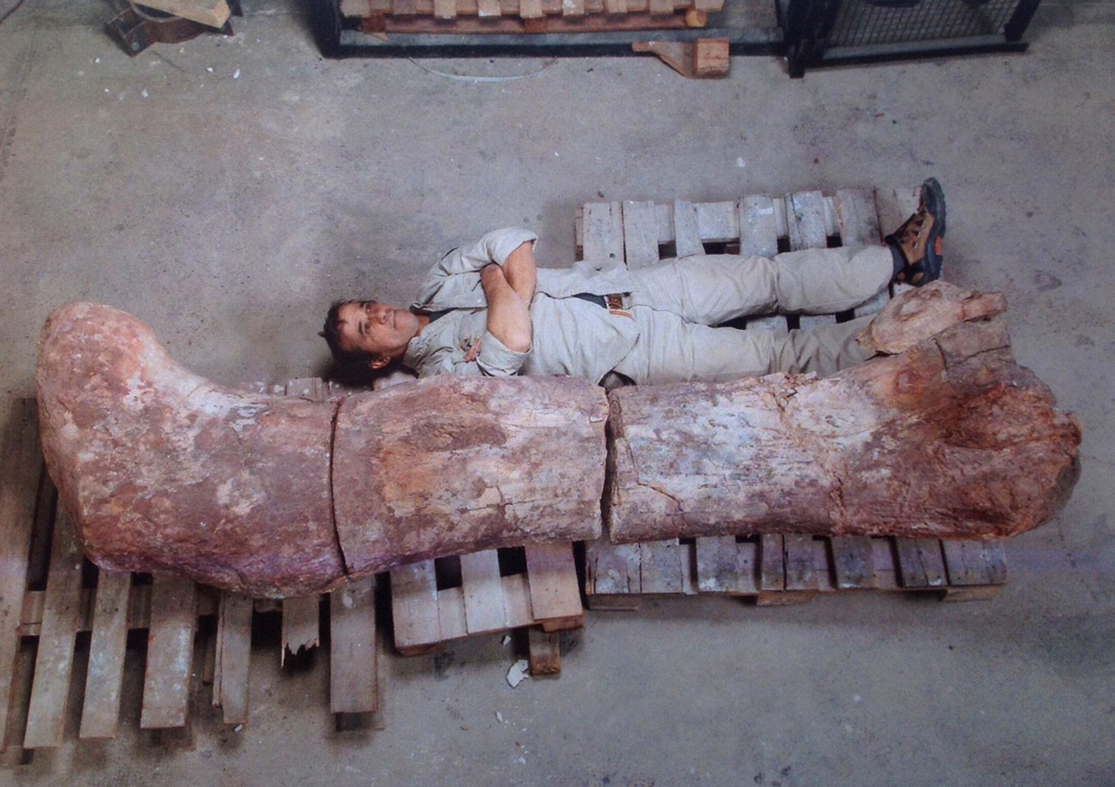 Sur cette photo, qui a fait la Une des journaux argentins, le fémur du dinosaure découvert en Argentine.