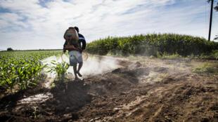 Mexique - mais - agriculture - champ