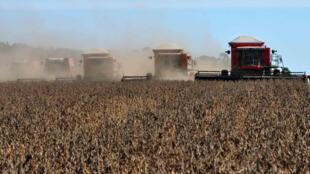 Le Monde se mostra preocupado com a quantidade de agrotóxicos pulverizados nas plantações brasileiras