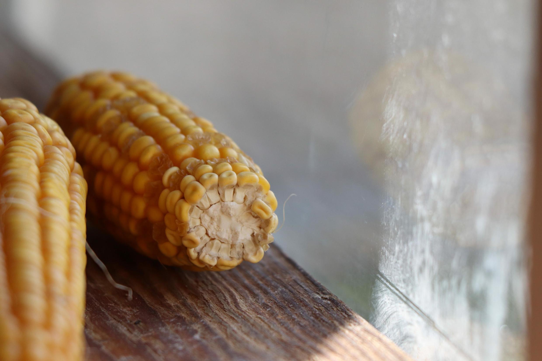 En RDC, certains producteurs locaux du maïs estiment qu'il faut plus de 15 000 hectares et un budget conséquent pour faire face au déficit alimentaire.