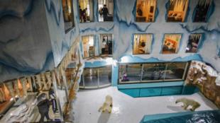 """Des ours polaires installés dans un enclos de verre pour le plaisir des clients d'un hôtel du """"Parc Polaire"""", un parc d'attraction à Harbin, dans le nord-est de la Chine, le 12 mars 2021"""