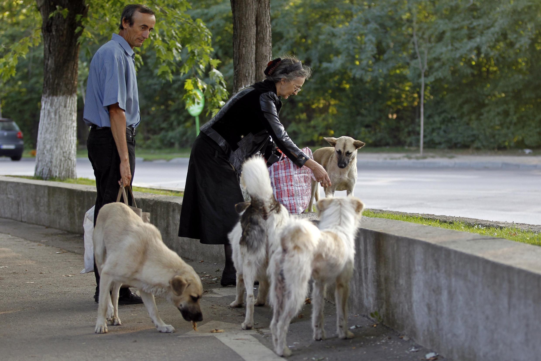 Cães de rua circulam em Bucareste, capital da Romênia.