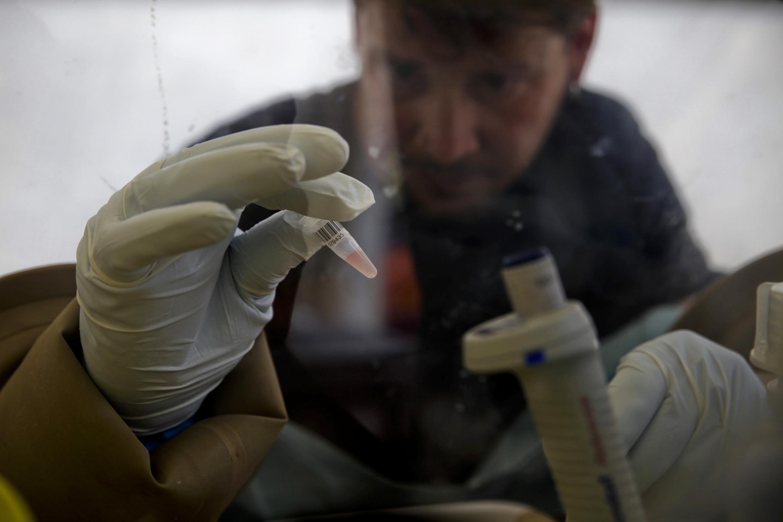Un scientifique analyse des prélèvements de sang pour étudier le virus Ebola.