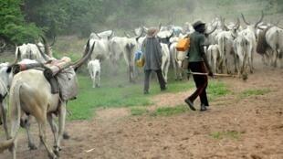 Rikicin Fulani da Makiyaya na haddasa asarar rayuka a Najeriya