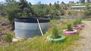 A Riverland Diary Bio Farm, l'eau de pluie est stockée dans de grands réservoirs et sert à l'irrigation.
