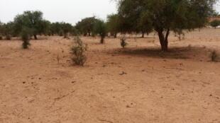 Sites déboisés dans la région de Tera, au Niger.
