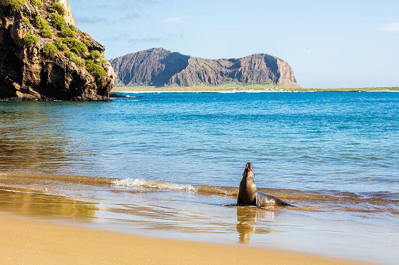 Galapagos-Réserve