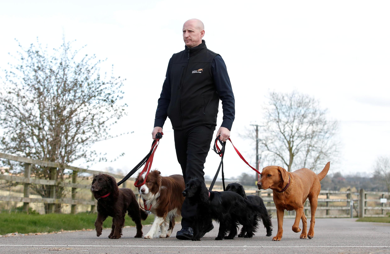 Собаки, возможно, смогут выявлять коронавирус по запаху