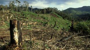 Une forêt tropicale décimée à Madagascar.