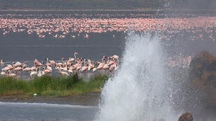 Lake Bogoria is a caustic cauldron fringed by geysers and populated by over a million flamingoes.