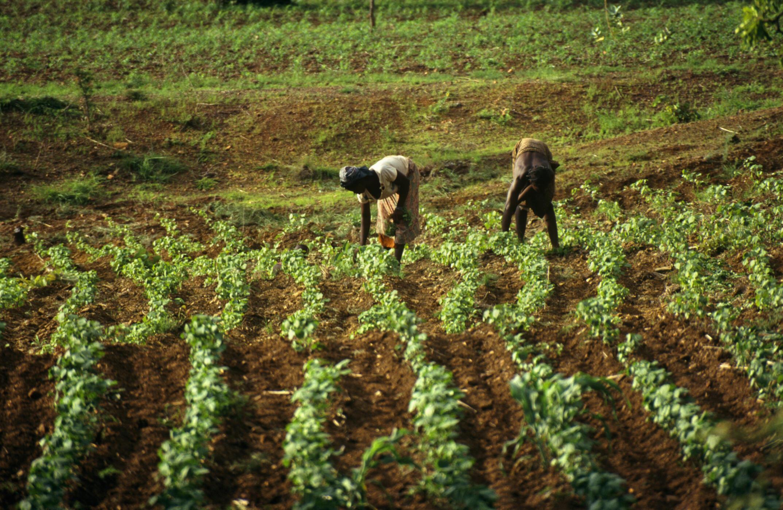 L'agriculture du Burkina Faso dépend principalement des pluies.