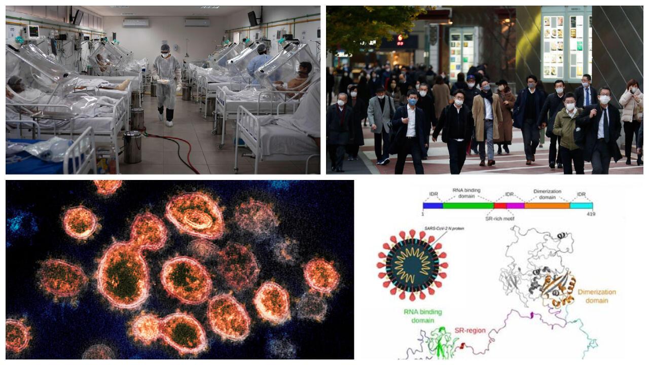 Virus mutação Amazonas Japão