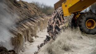 11月9日丹麦一养殖场卡车倾倒扑杀水貂