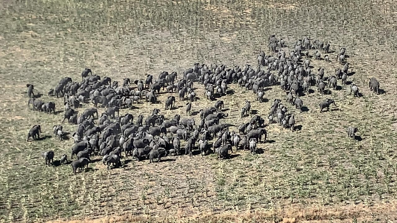 Herds of elephants seen moving across the savannah close to Rann in Borno State, Nigeria on 19 December, 2019.