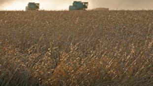 Un champ de blé, dans une ferme du sud de la Russie.