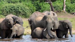 PHOTO Elephants Botswana - 3 mars 2013