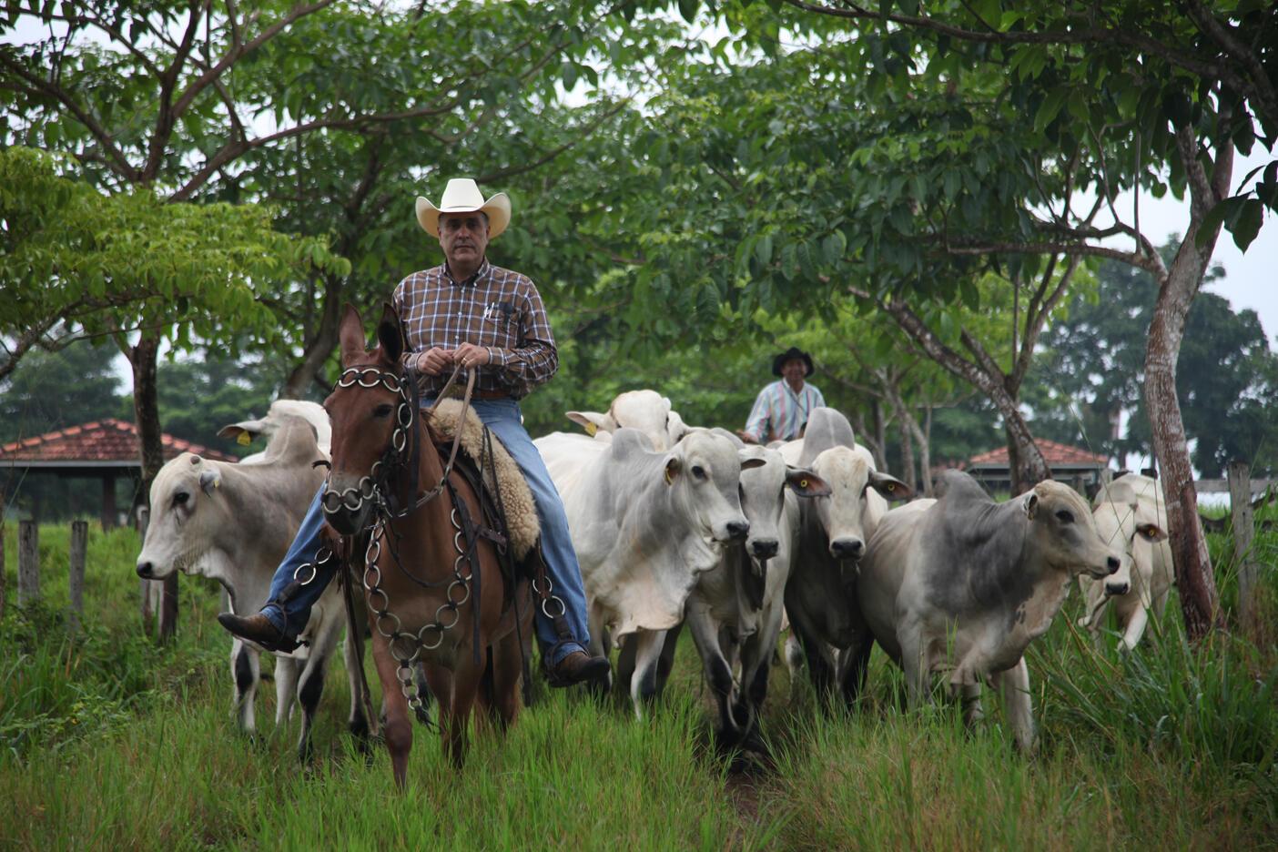 En 3 ans, Mauro Lucio, propriétaire terrien du Paragominas, au nord-est du Brésil, a réussi à se mettre en conformité avec la loi. Il trouve l'amnistie que prévoit le code forestier « frustrante », car il veut « que ce code soit appliqué et respecté ».