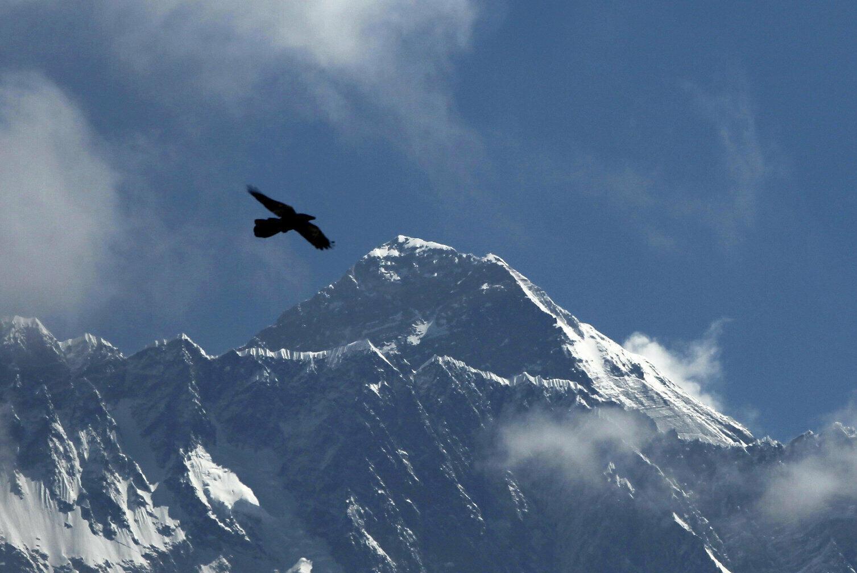 在喜马拉雅山区尼泊尔侧背景下飞翔的鸟