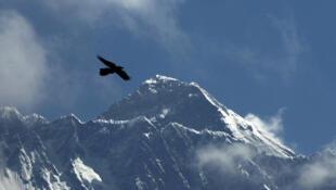 在喜馬拉雅山區尼泊爾側背景下飛翔的鳥