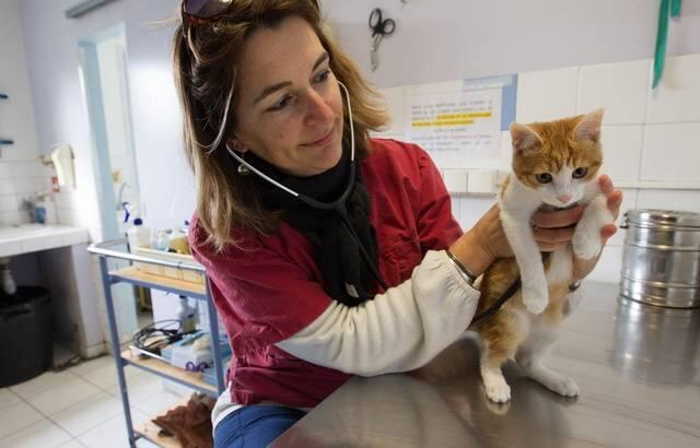 Oscar, an abandonned kitten, is examined by the SPA (Society for the Protection of Animals) in Marseille, February 2014.