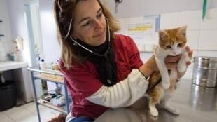 Le chaton Oscar en consultation à la SPA de Marseille en février 2014 (photo d'illustration)