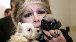 Актриса Брижит Бардо создала собственный фонд по защите животных в 1986 году