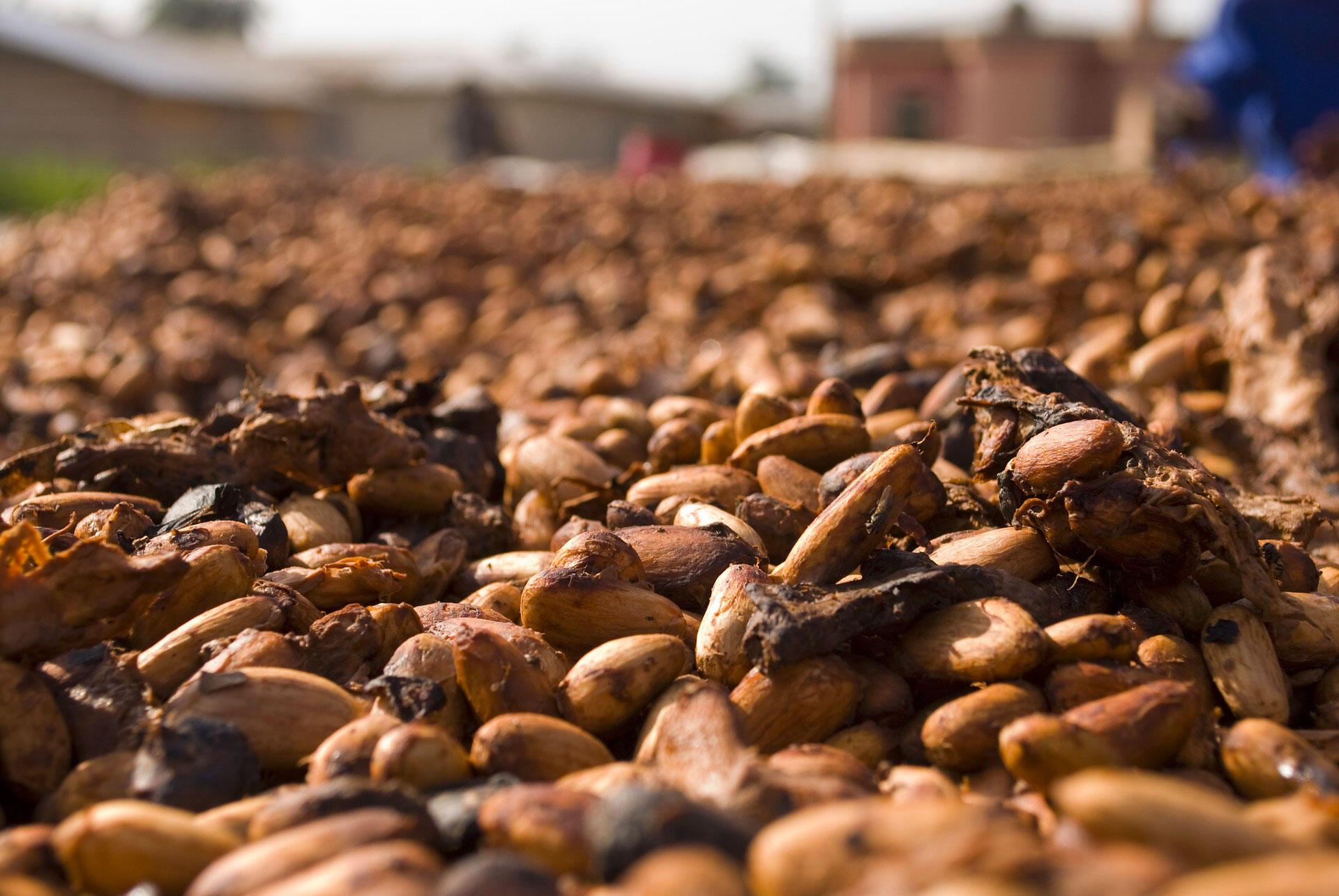 Cacao Ghana fèves