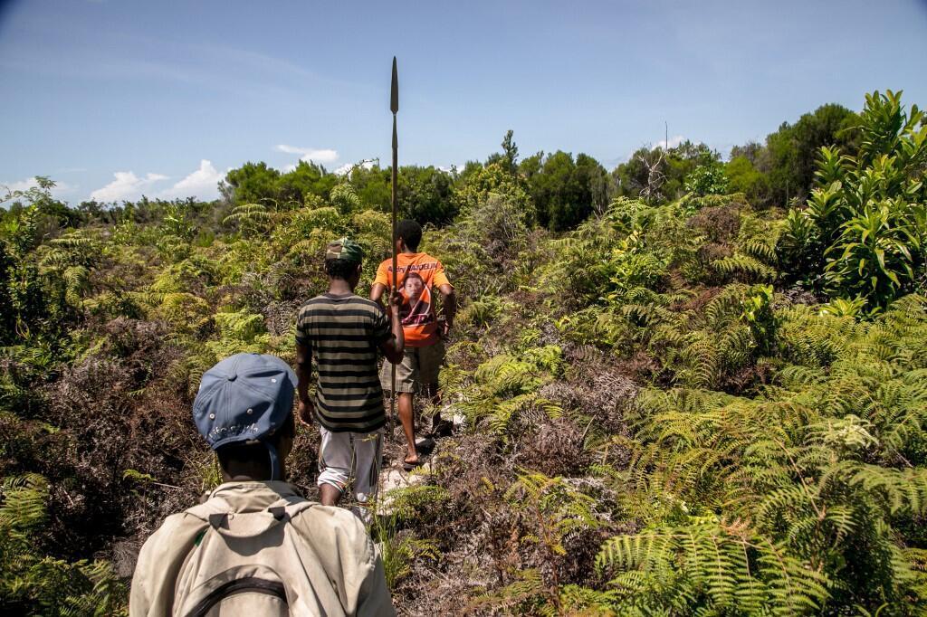 Des guides forestiers dans la forêt de Vohibola, à Madagascar. (image d'illustration)