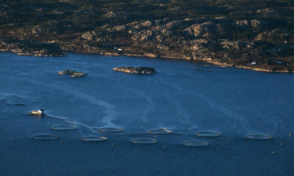 Vue générale d'un élevage de saumon près de Trondheim, en Norvège. (Photo d'illustration)