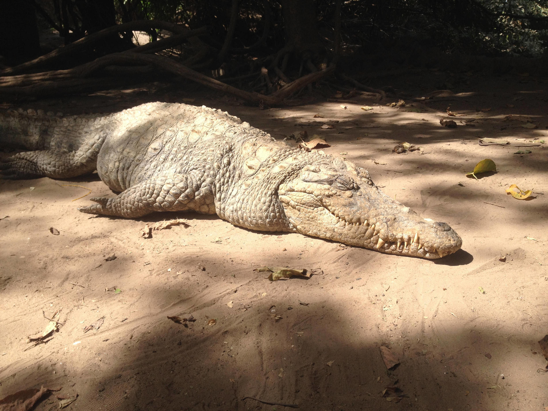 No tourists to snap at the Kachikally Crocodile Pool.