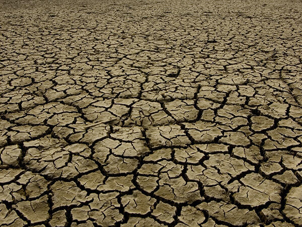 Afin de lutter contre l'avancée des déserts au Sahel, gouvernements et organisations non gouvernementales entendent mener des campagnes de plantation d'arbres.