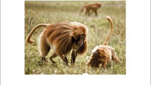 «Dominants et dominés chez les animaux», de Alexis Rosenbaum.