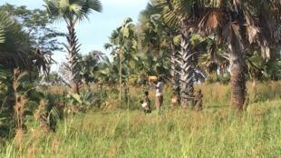 En Ouganda, les enfants nés de la rébellion, eux, se font encore discrets.