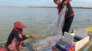 Lượng cá trên dòng sông Mêkông ngày càng khan hiếm. Ảnh chụp ngày 05/01/2018, một cặp vợ chồng người Cam Bốt làm nghề chài lưới trên sông Mêkông tại tỉnh Kandal, Cam Bốt.