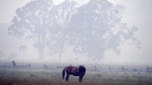Dans un pré, près d'Eden (New South Wales), le 6 janvier 2020.  Selon des experts, le changement climatique a contribué à la sécheresse et aggravé la saison des incendies qui, en cinq mois, ont détruit plus de 10000 hectares de terres.