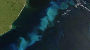 Le phytoplancton, observé ici au large de l'Argentine dans l'océan Atlantique Sud, produit la plus grande part de l'oxygène que nous respirons.