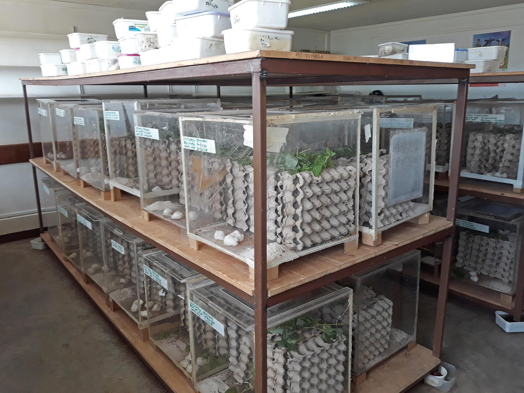 une des salles où les chercheurs élèvent des insectes