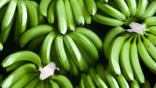 La banane, fruit le plus vendu dans le monde, est touché par une maladie qui apparaît pour la première fois en Afrique de l'Est.