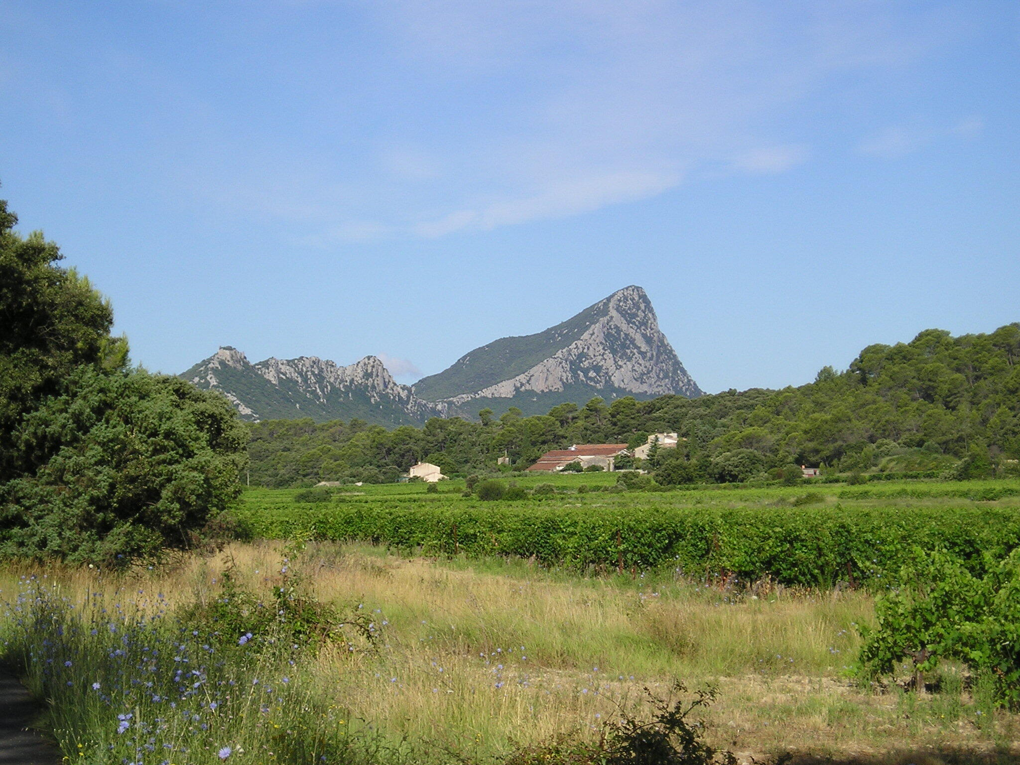 Le vignoble de Pic Saint-Loup vu de La Vieille.