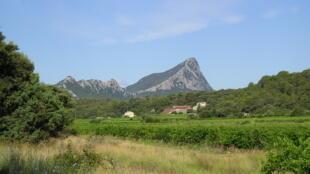 Le vignoble de Pic Saint-Loup vu de La Vieille, dans le Languedoc.