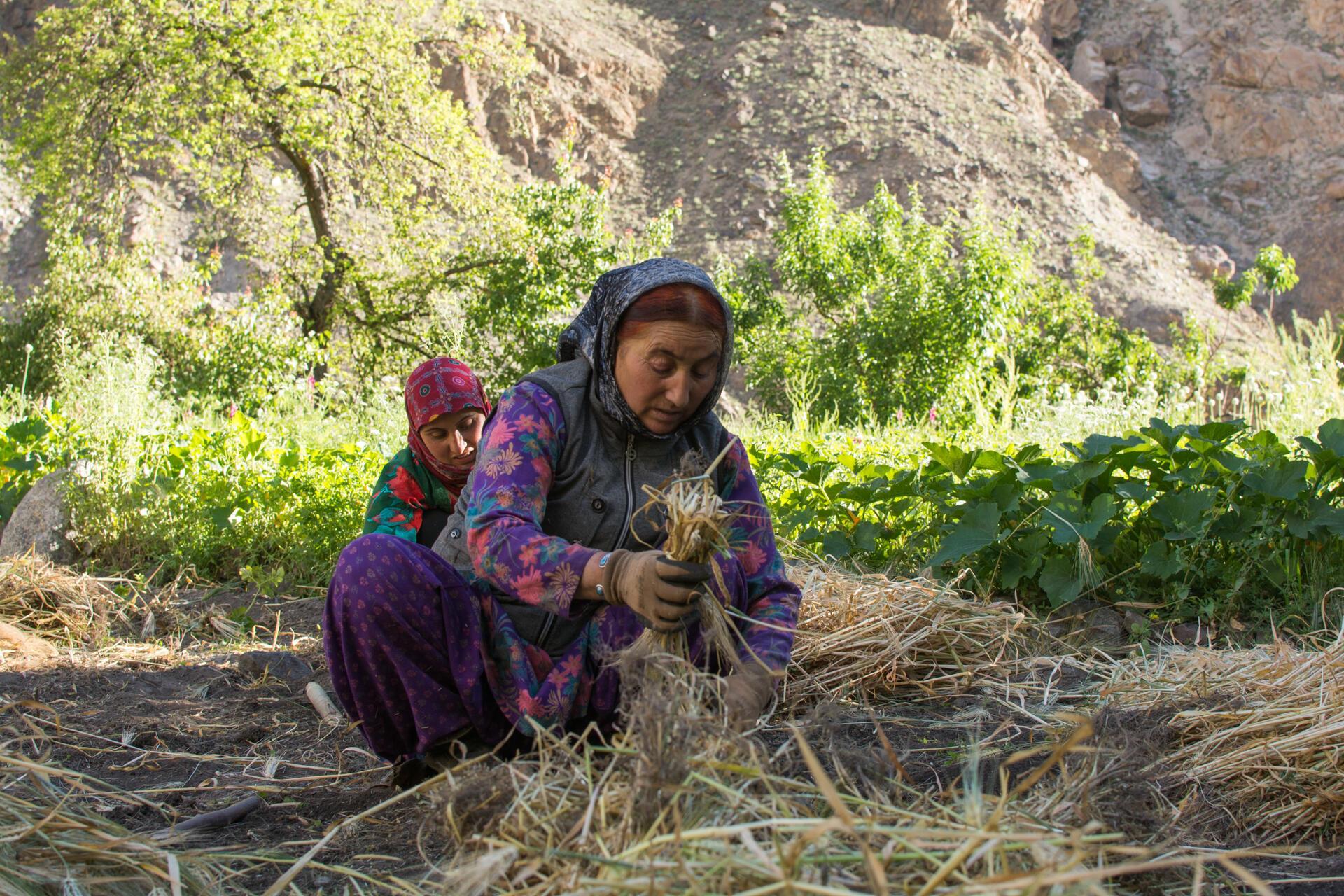 Seulement 1/3 des terres en Inde sont irriguées. Ce qui laisse les paysans dépendants de la pluie.