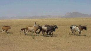 Fome na Eritreia