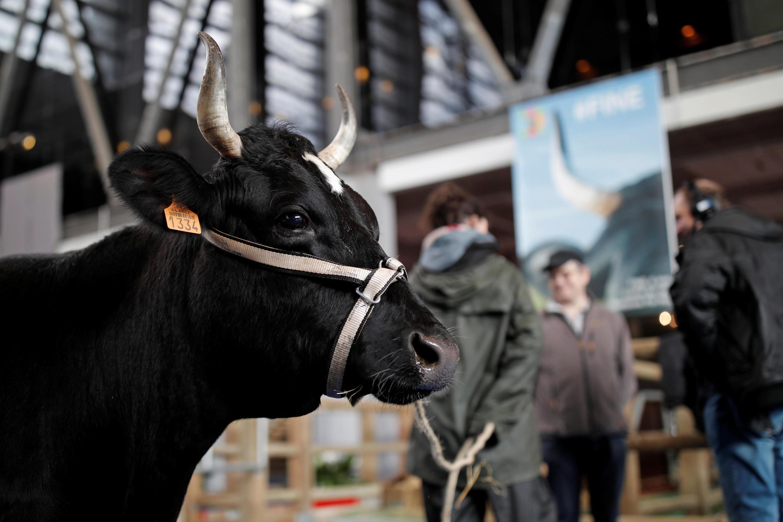 Шестилетняя Фин — муза Парижского сельскохозяйственного салона