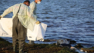Trabajadores de la protección civil de Túnez se disponen a cubrir el cadáver de un migrante víctima de un naufragio, el 16 de julio de 2019 cerca de la ciudad de Zarzis, al este del país