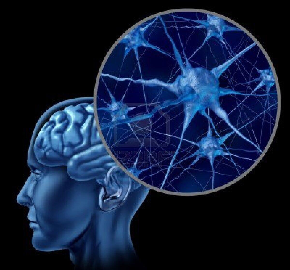 Pesquisadores descobriram que o excesso de glutamato pode prejudicar transporte de substâncias no cérebro