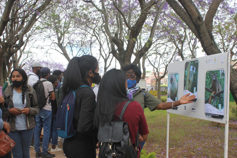L'exposition sur la protection des lémuriens organisée par la Fédération Nationale des Guides, à Antananarivo, a attiré de nombreux passants. Près d'un tiers des espèces de ce primate endémique de Madagascar sont en danger critique d'extinction.