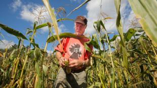 Albie Barden pèle un épi de maïs dans un champ de sa ferme de Norridgewock, dans l'État du Maine, le mardi 20 septembre 2016.