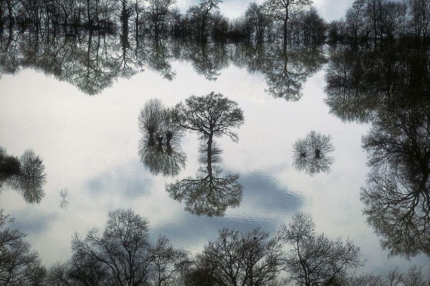 Arboles en el agua cerca de Taponas, Rhône, Francia (46°07' N – 04°45' W)